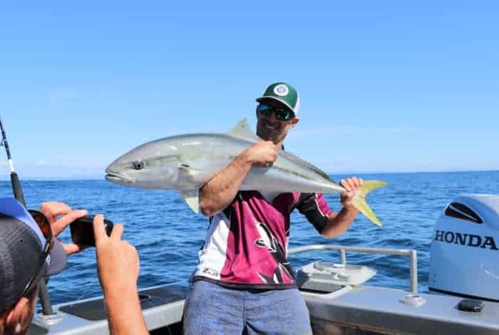 NZ Kingfish